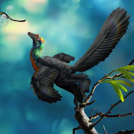 A dinosaur with multi coloured feathers been discovered in China