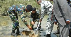 Pak Army plants 2 million trees in Pakistan within a day