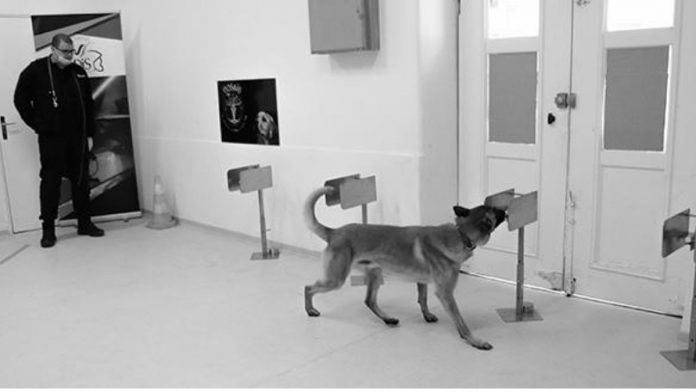 Trained Dogs Reach 94% Accuracy While Detecting Covid