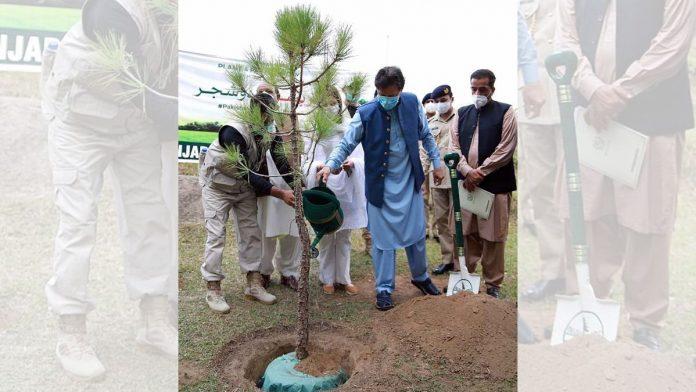 planting around 200m saplings