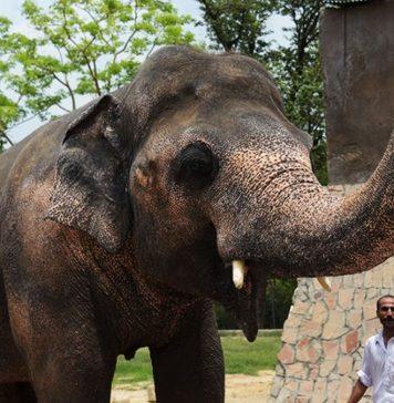 zoo in Islamabad